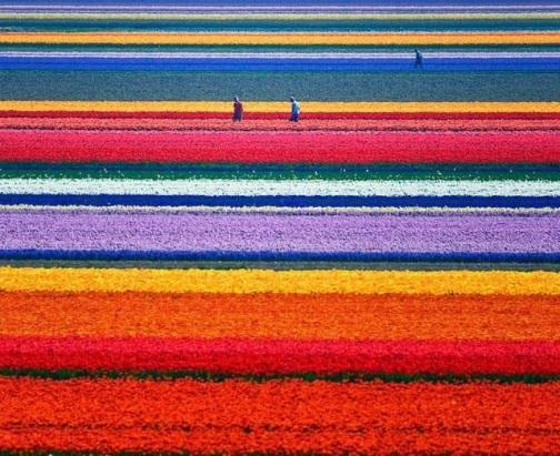 florescolores